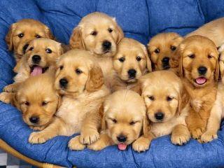 כלבים, החברים הטובים ביותר